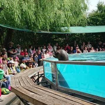 Hunawhir, NaturOparC, parc de réintroduction, Loutre, Alsace, Tourisme